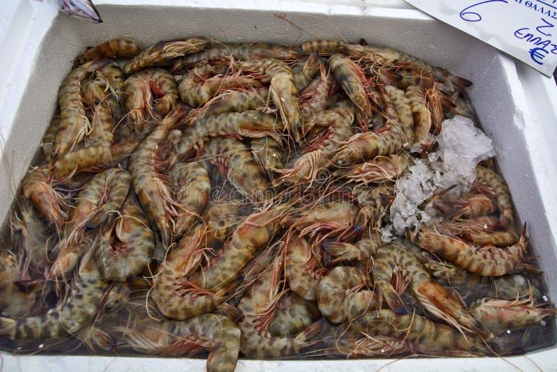 Shrimp on the market royalty free stock image
