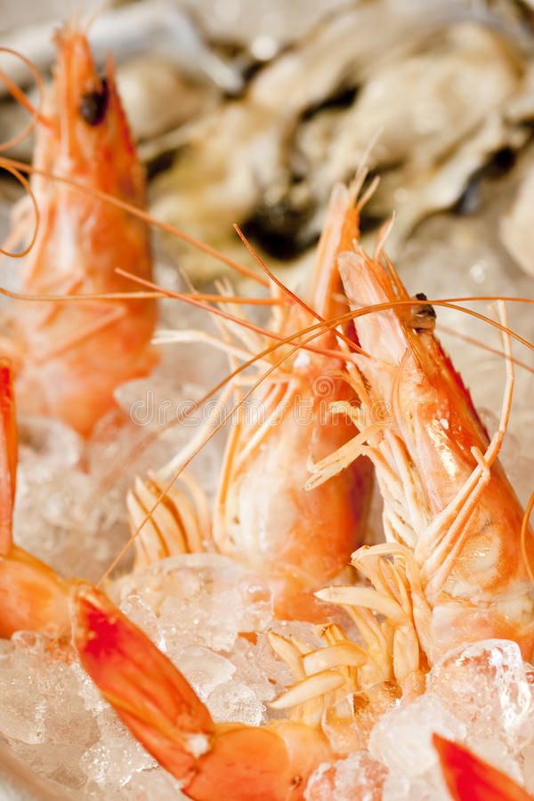 Download Shrimp and oysters stock image. Image of crustaceans - 16387827