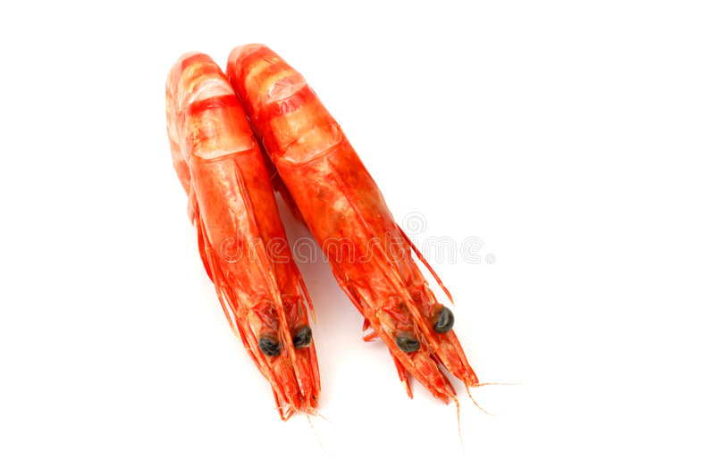 Download Shrimp Pair 2 Stock Images - Image: 1713074