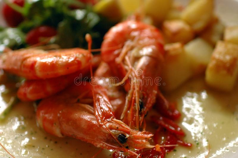 Shrimp on a plate stock image