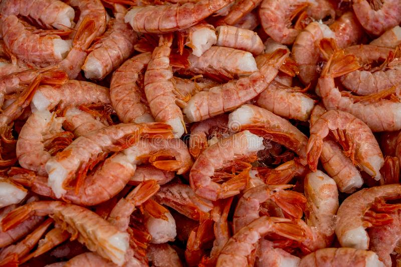 Shrimp/Prawn at fish market stock image