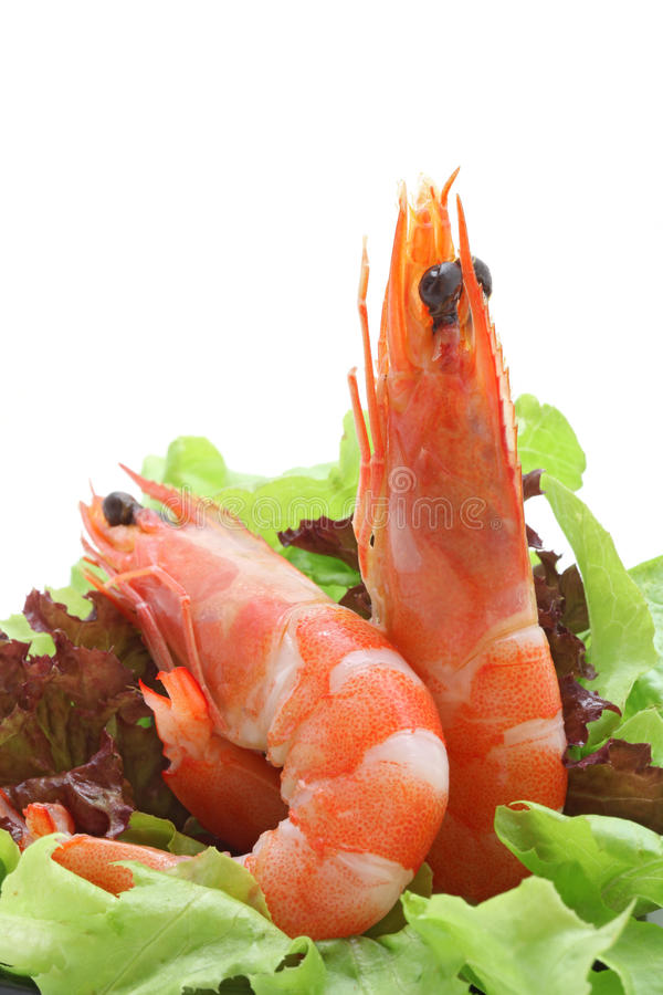 Shrimp salad cocktail royalty free stock images