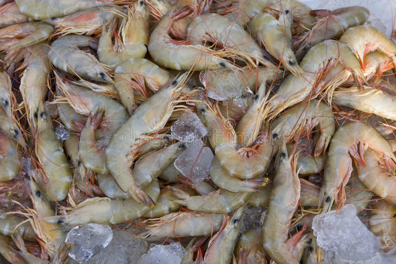 Shrimp stock stock photography