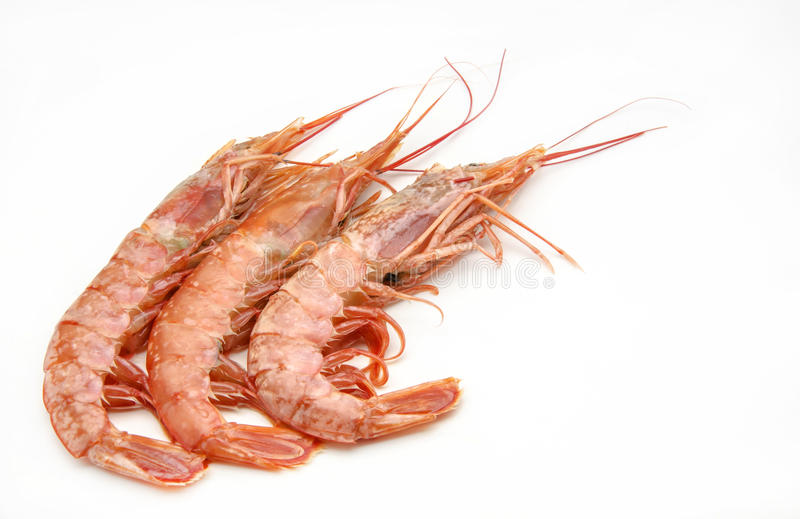 Shrimp. Various grilled shrimp surrounded by white background royalty free stock photography