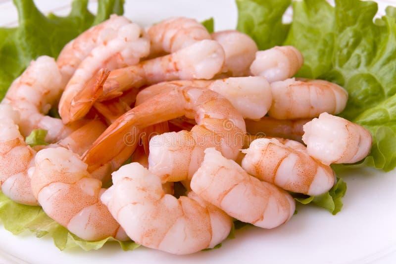 Download Shrimps stock photo. Image of macro, crustacean, food - 14857964