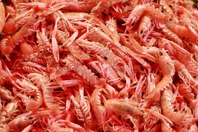 Download Shrimps stock image. Image of shrimp, ingredient, animals - 25820743