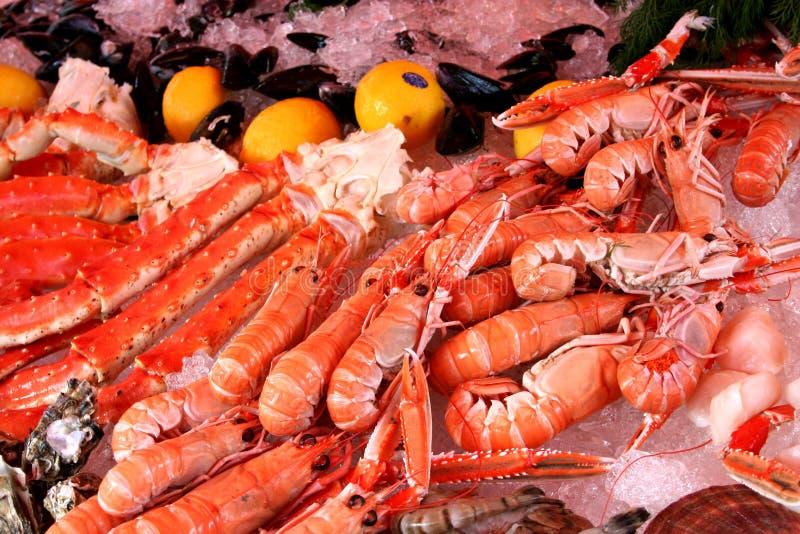 Download Shrimps stock photo. Image of crevette, crabs, shellfisch - 685142