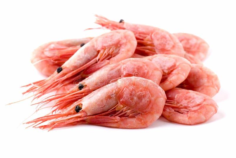 Shrimps. Cooked shrimps close up on white background