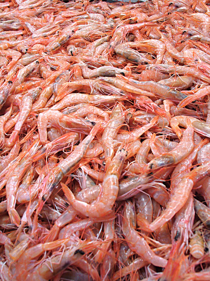 Download Shrimps stock image. Image of crustacean, appetizer, healthy - 80633