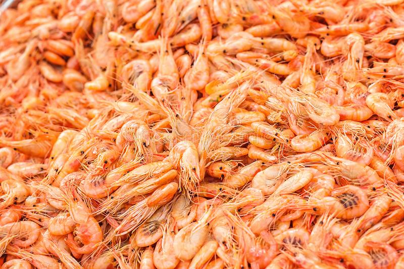 Shrimps background texture. A lot of sea shrimp or pattern of krill. Sea food like shrimp or krill on the street food festival. St royalty free stock photos