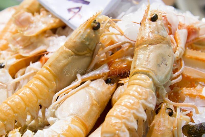 Shrimps royalty free stock photos