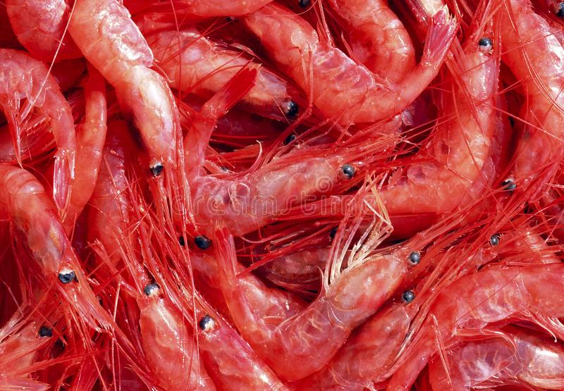 Shrimps. The fish market. Shrimps. The fish market close up royalty free stock photography