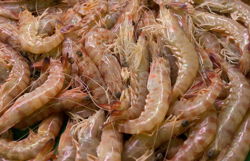 Download Shrimps Royalty Free Stock Images - Image: 33247959