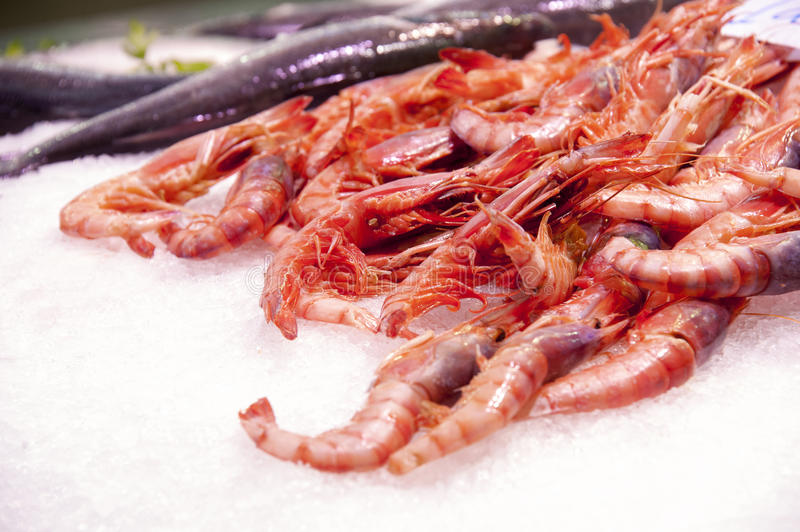 Shrimps in ice stock photos