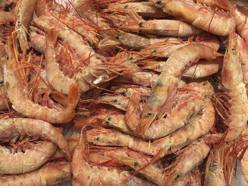 Shrimps - Prawns stock photo