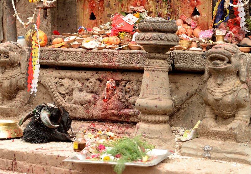 Shrine with sacrifices in Kathmandu. A shrine with sacrificed food, flowers and animals in Kathmandu, Nepal royalty free stock images