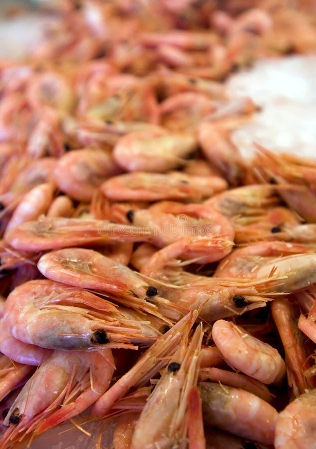 Shripms μικρός Στοκ φωτογραφία με δικαίωμα ελεύθερης χρήσης