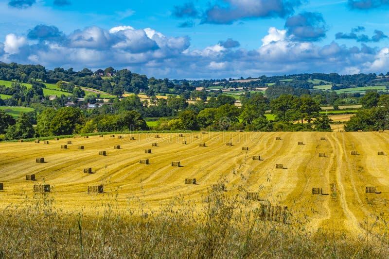 Shropshire landssida Älskvärda rullande guld- fält för höbaler och blå himmel arkivbild