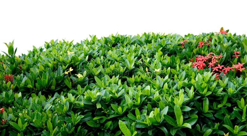 shrub загородки стоковая фотография