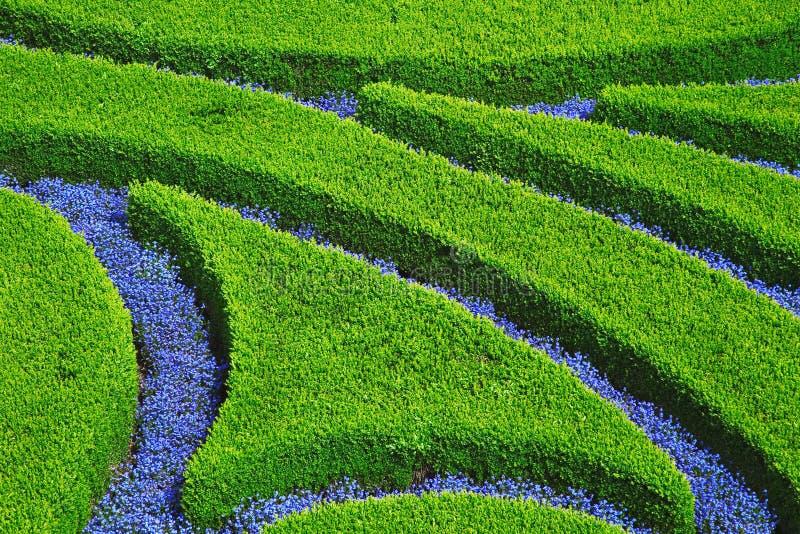 shrub цветка desig стоковая фотография rf