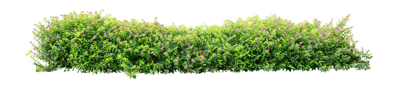 shrub стоковые изображения rf