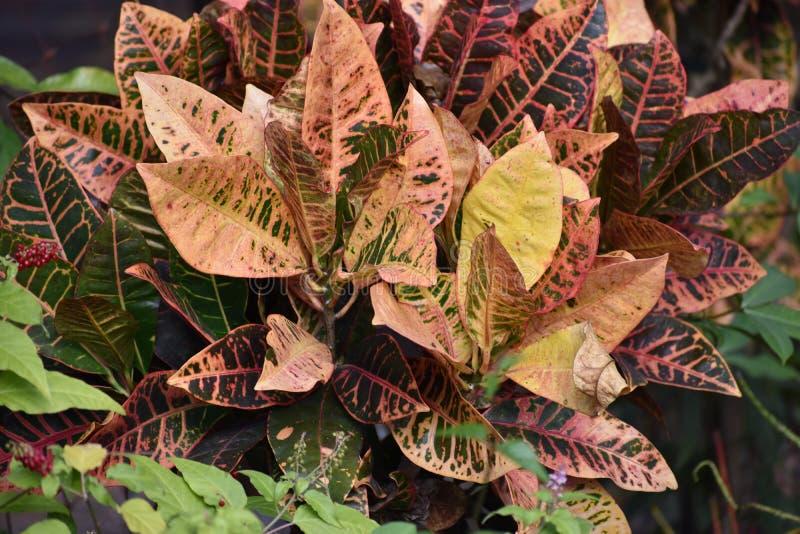 shrub стоковое изображение