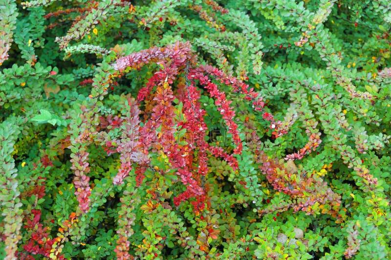 shrub стоковая фотография