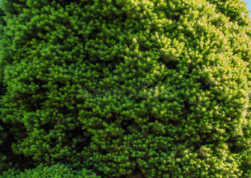 Shrub Closeup. A macro shot of a green shrub. Background or texture stock image