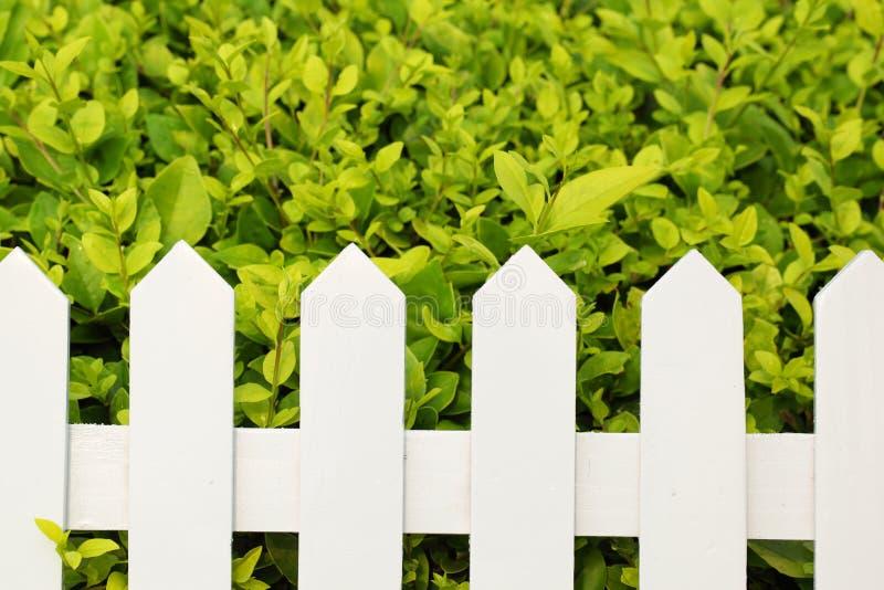 Download Shrub and fence stock photo. Image of backyard, shrub - 14832830