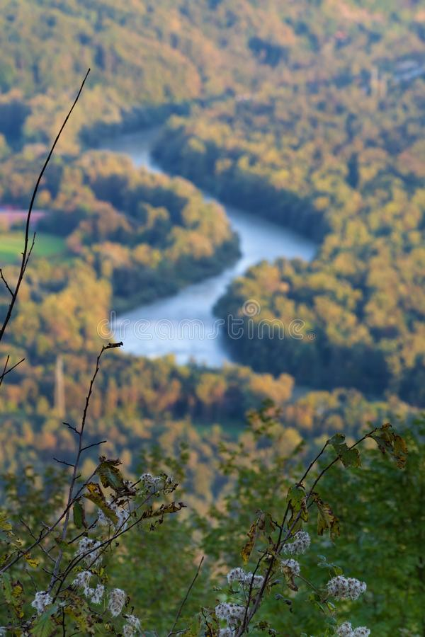 Shrub in foreground and river bending through forest in background during sunset royalty free stock photo
