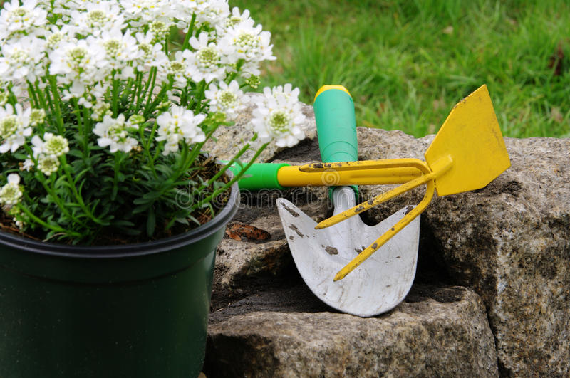 Shrub planting. In spring, gardening with shovel stock images