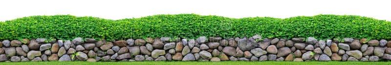 Download Shrub on stones stock photo. Image of background, spring - 20505684