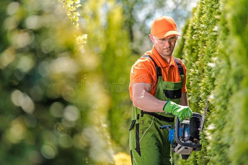 Shrub Wall Trimming stock photography