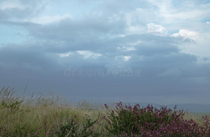 SHRUB WITH WILD FLOWERS AGAINST CLOUDS stock photos
