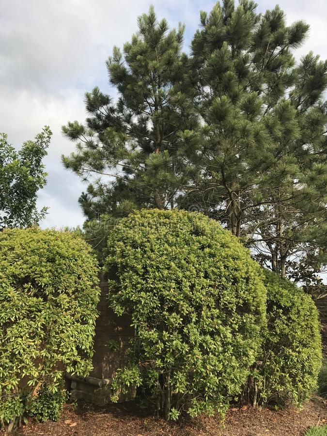 shrubs imagem de stock