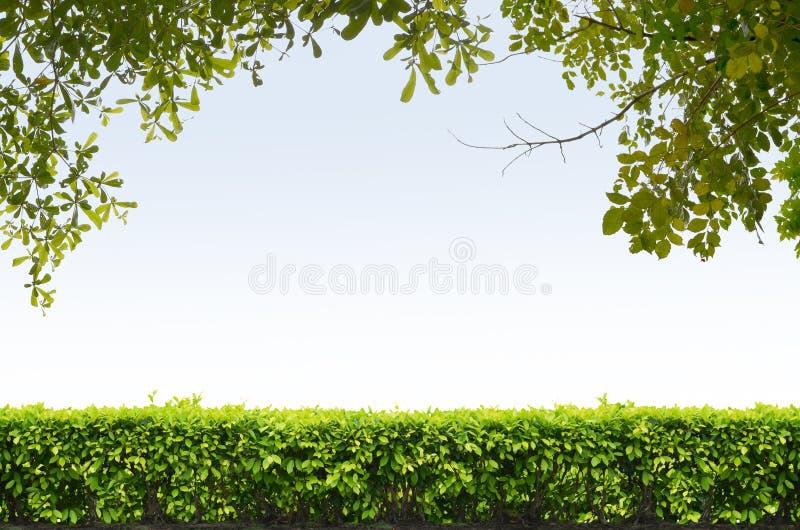 Shrubs fence on blue sky royalty free stock photos