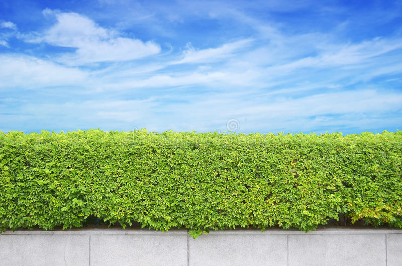 Shrubs fence on blue sky stock photography