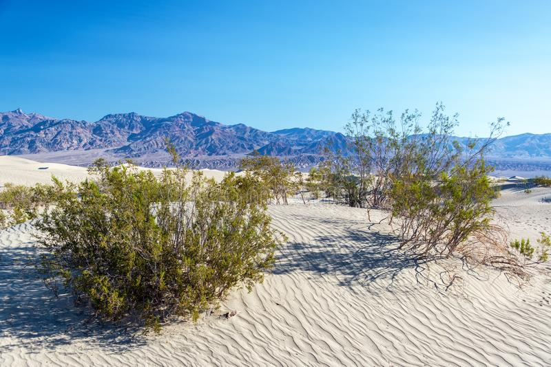 Mesquite Flat Sand Dunes and Shrubs stock photo