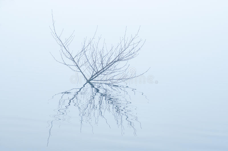 Shrubs reflected in the water of the lake with fog