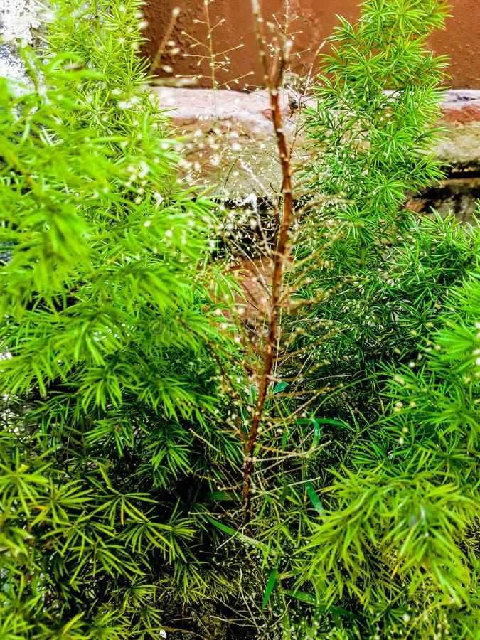 shrubs stock images