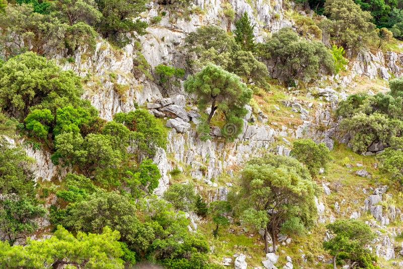 Shrubs and trees on the mountain. Stones and greenery stock image