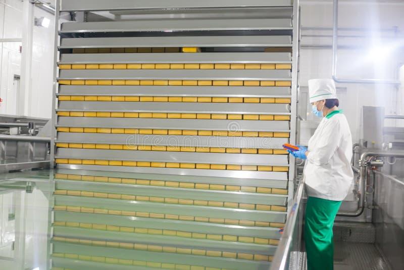 SHUCHIN, БЕЛАРУСЬ - 26-ОЕ ЯНВАРЯ 2015 Женщина контролирует производственную линию на фабрике сыра стоковые фото
