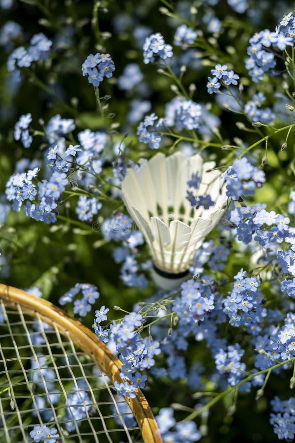 shuttlecock和羽毛球拍在美丽,小蓝色花在庭院里在一个晴朗的夏日 免版税库存图片