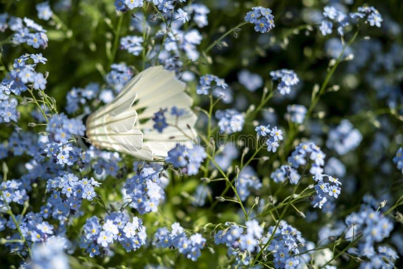 Shuttlecock在美丽,小蓝色花说谎在庭院里在一个晴朗的夏日 免版税库存图片