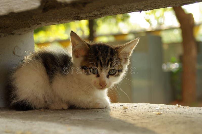 A shy cat stock photo