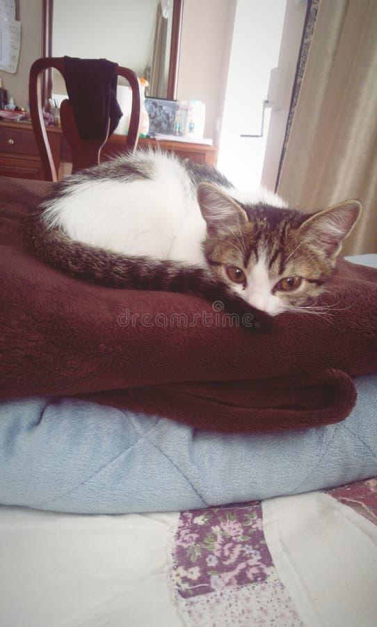 Shy Cat stock photos