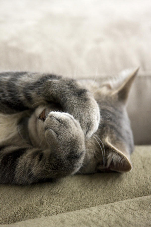 Free Shy Cat With Paws Over Face Royalty Free Stock Image - 9642876