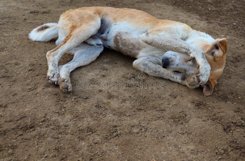 Shy dog sleeping on ground stock image