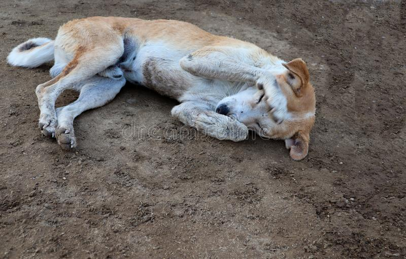 Shy dog sleeping on ground stock photo