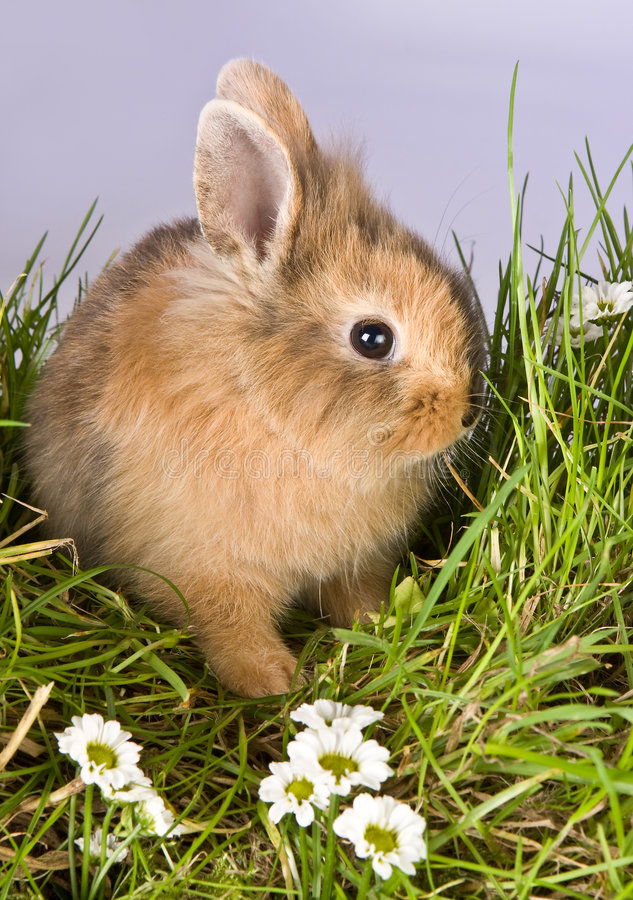 Shy easter bunny. Baby easter bunny looking shy in spring grass stock photo